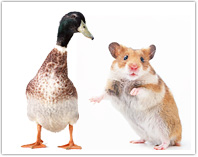 鳥/ネズミ